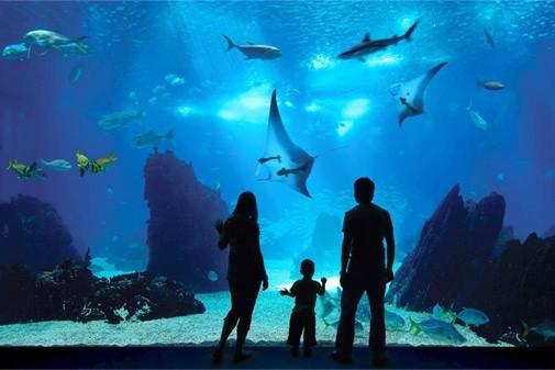 Самый большой океанариума в России